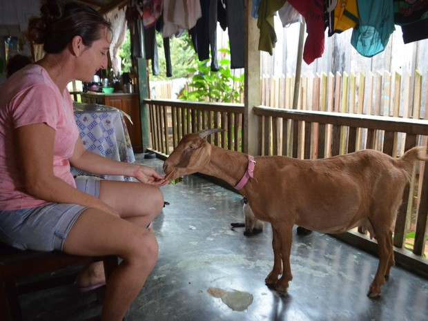 Segundo Maria, bolacha se tornou alimento preferido da cabra de estimação (Foto: Samira Lima/G1)