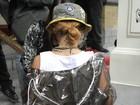 De shortinho, Rihanna mostra parte do bumbum em Amsterdã