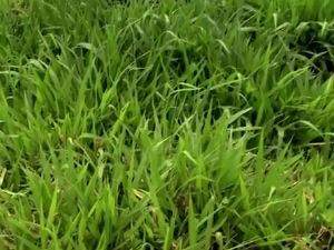 exemplo de piquete irrigado ajuda a aumentar o pasto  (Foto: Reprodução/TV Gazeta)