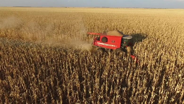 agricultura-colheita-milho-goias (Foto: Marcos Camargo)
