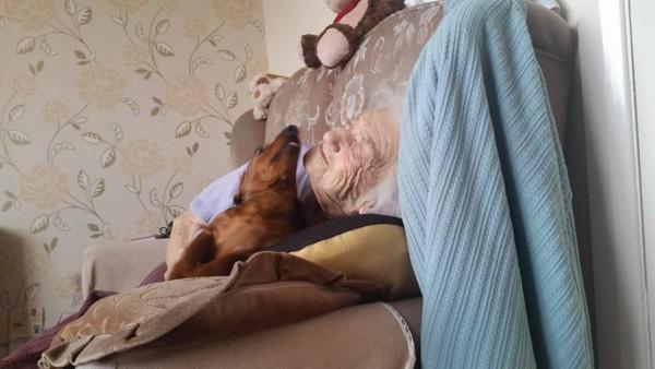 Cadela ajuda a aliviar sofrimento de idosa com alzheimer  (Foto: Reprodução / Twitter)