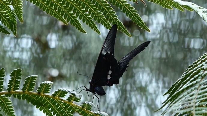 O borboletário do Centro de Educação Ambiental (CEA) é uma das principais atrações da Fazenda Santo Antônio, em Capivari (SP) (Foto: reprodução EPTV)