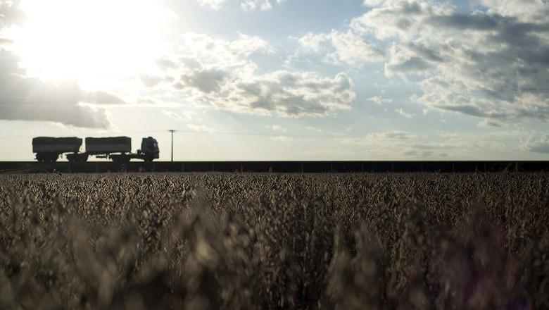 agricultura-campo-soja-safrinha (Foto: Emiliano Capozoli/Ed. Globo)