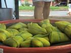 Vizinhos se reúnem para manter viva a tradição da 'pamonhada', em Goiás
