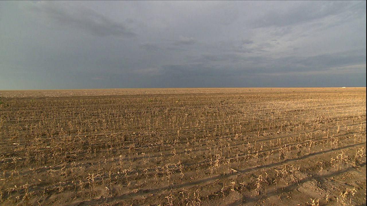 GRU seca prejudica soja e milho no piauí (Foto: TV Globo)