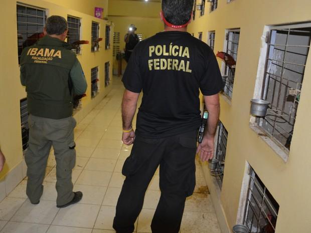 Polícia Federal apreendeu 160 galos em galpão de Gravatá (Foto: Divulgação/PF)