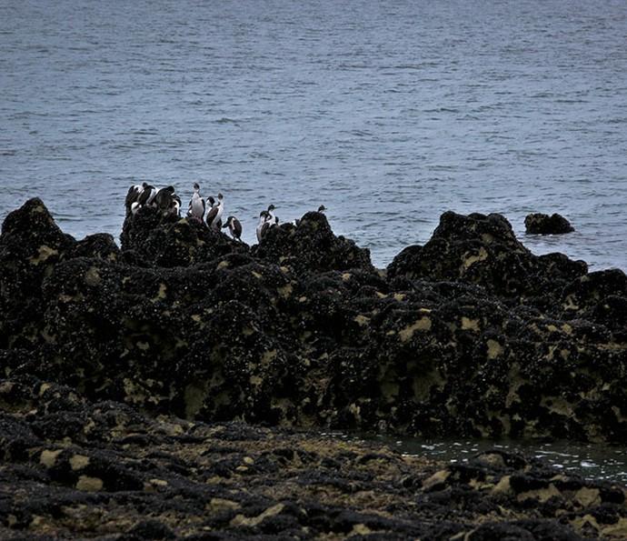 Pinguins habitam a região onde a minissérie foi gravada (Foto: Gabriel Nascimento/Gshow)