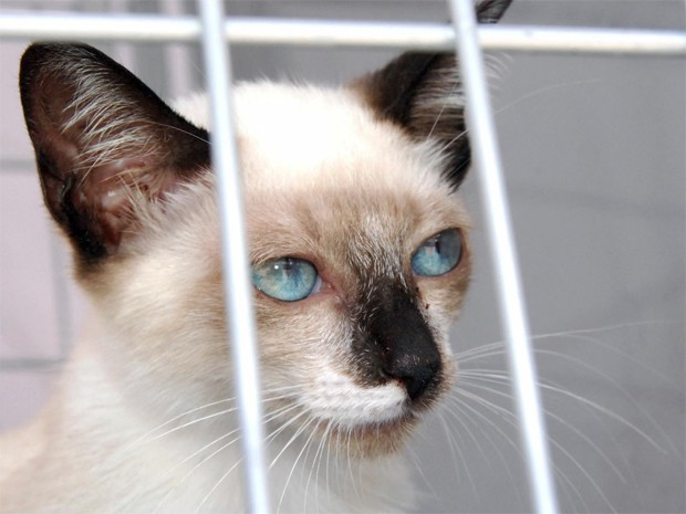 Ao todo, 21 gatos foram adotados na exposição em João Pessoa (Foto: Mazinho Gomes/Secom-JP)