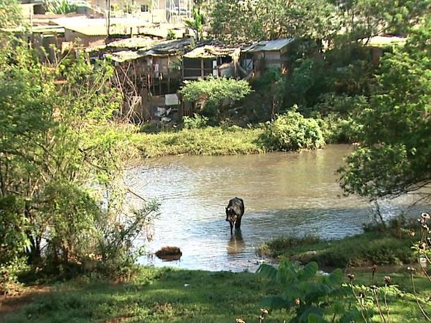 Famílias construíram barracos irregularmente próximo a barragem na zona oeste de Ribeirão Preto (Foto: Antônio Luiz/EPTV)