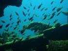 Estudo identifica genes de peixes que se adaptam à mudança climática