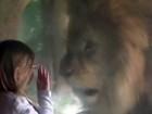 Criança de três anos 'encara' leão sem medo em zoo da Nova Zelândia
