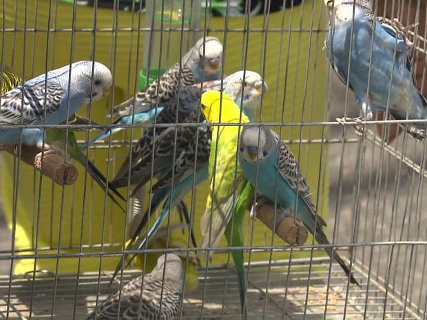 Aves estavam sendo vendidas em mercado público da cidade (Foto: Reprodução/Tv Paraíba)