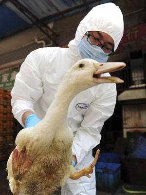 Agente de saúde examina em mercado na cidade chinesa de Changsha (Foto: Reuters/China Daily)
