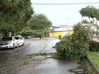 Chuva derruba várias árvores e deixa 20 mil imóveis sem luz em Goiânia