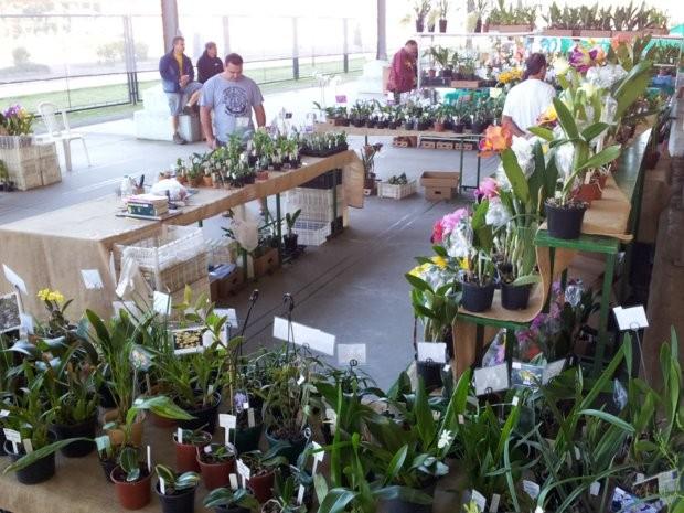 Exposição de Orquídeas em Piracicaba recebeu bom público no final de semana (Foto: Eduardo Guidini/G1)