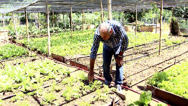 Antônio Prícipe conversa com as plantas de sua horta para ajudar no crescimento (Foto: reprodução EPTV)