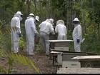 Produção de mel ajuda a desenvolver aldeias do Litoral da Paraíba