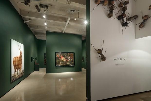 """Paul Kasmin Gallery celebra 600 anos de ilustração botânica com """"Naturalia"""" (Foto:  Christopher Stach/Paul Kasmin Gallery)"""
