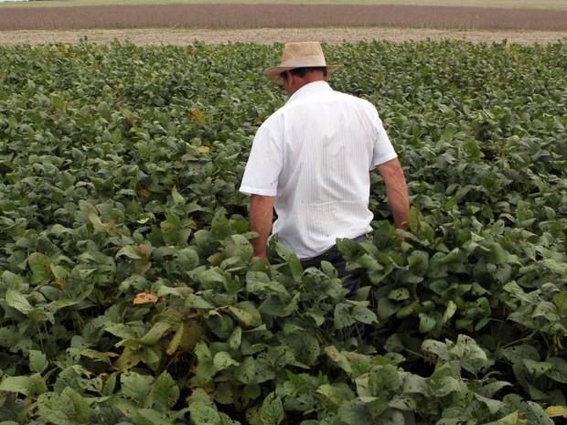 Trabalhador caminha em plantação de soja na cidade de Primavera do Leste, em Mato Grosso. (Foto: REUTERS/Paulo Whitaker)