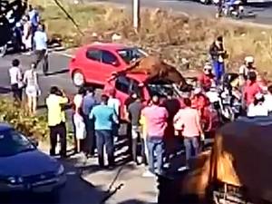 Cavalo  foi atropelado por carro na BR-101 Sul, na altura do Ceasa, no Recife (Foto: Reprodução / WhatsApp)