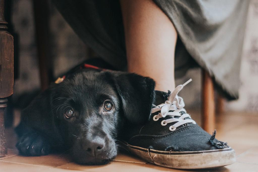 A cachorrinha Yzma (Foto: Maria Davison Ramos)