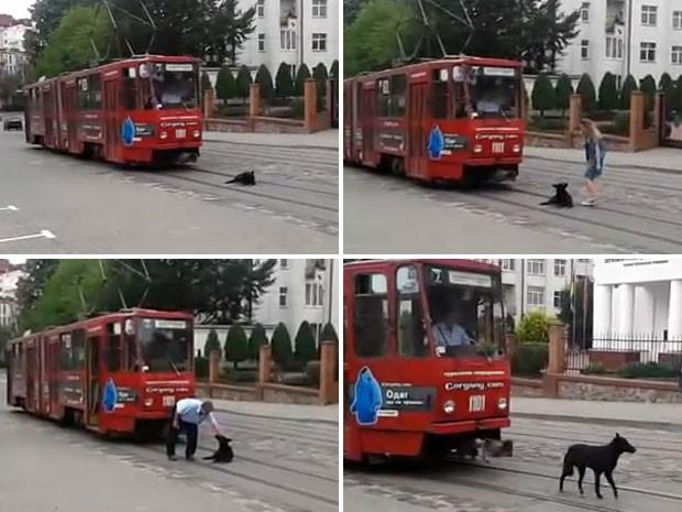 """Cachorro """"preguiçoso"""" não se levanta dos trilhos do bonde por nada.  (Foto: Reprodução)"""
