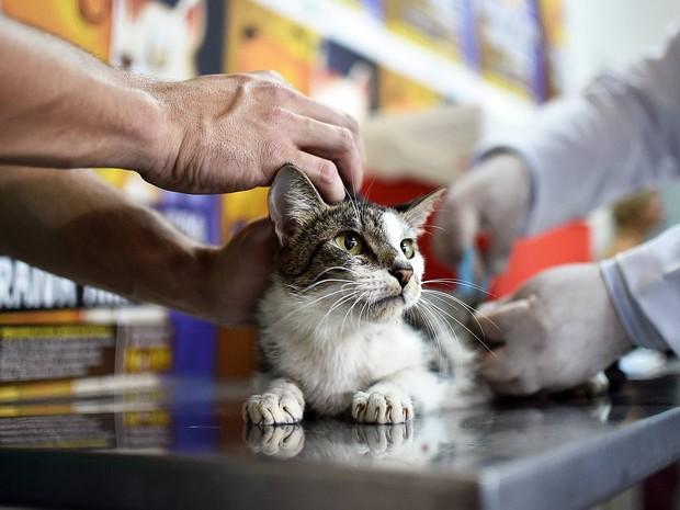 Gato é imunizado durante campanha de vacinação contra a raiva animal no Distrito Federal (Foto: Andre Borges/Agência Brasília)