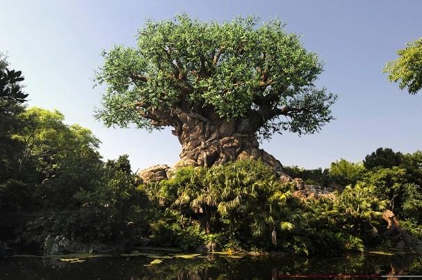 Disney imperdível: visite o Animal Kingdom à noite