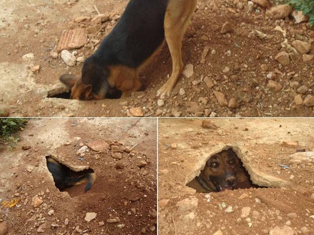 Fotos registradas pela jornalista dona da cachorra mostram 'Betty Boop' cavando o túnel onde passa o dia em Pouso Alegre, MG (Foto: Daniela Ayres / Arquivo pessoal)