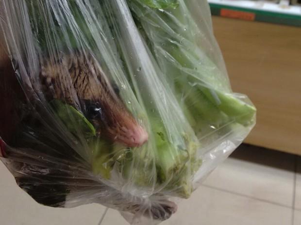 Jovem encontrou gambá entre verduras de mercado (Foto: Gabriela Marins / Arquivo Pessoal)