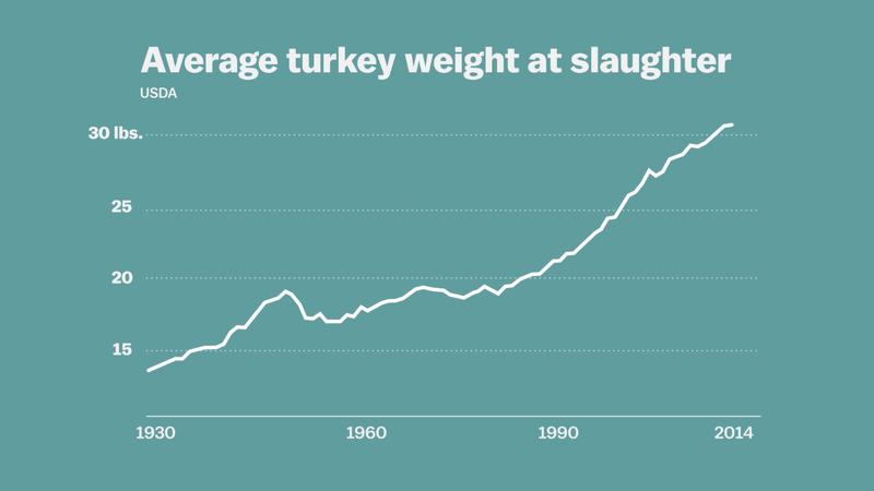 Evolução do peso dos perus na hora do abate por década (Foto: Reprodução)