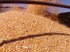 Criadores sentem a alta no preço do milho