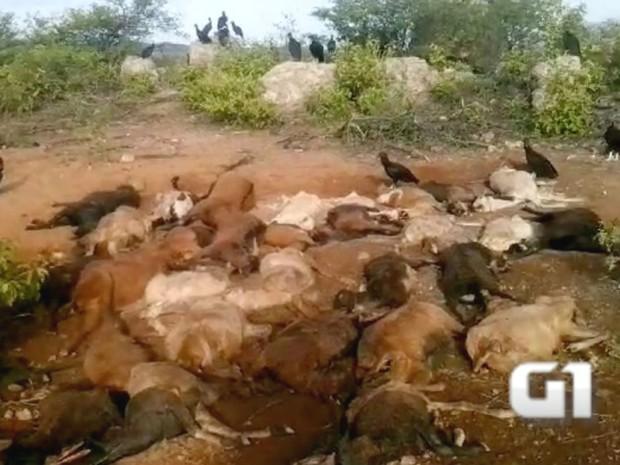 Animais morreram durante temporal na quarta (30), em Currais Novos (Foto: Edmilson Sousa/G1)