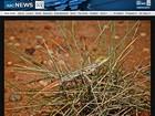 Nova espécie de lagartixa é descoberta no nordeste da Austrália