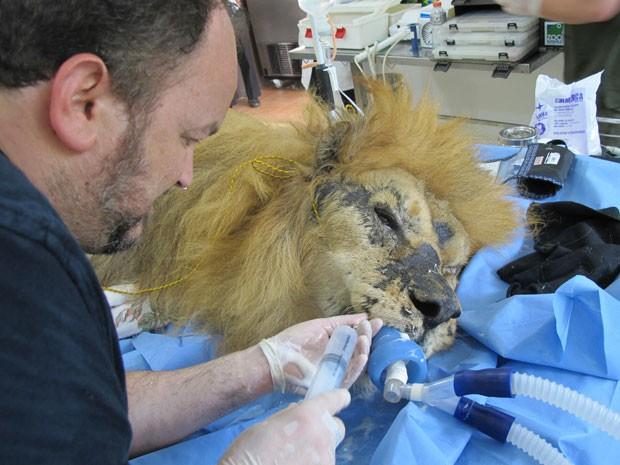 O procedimento reuniu ao menos 15 pessoas, entre veterinários e especialistas (Foto: Eduardo Carvalho/G1)