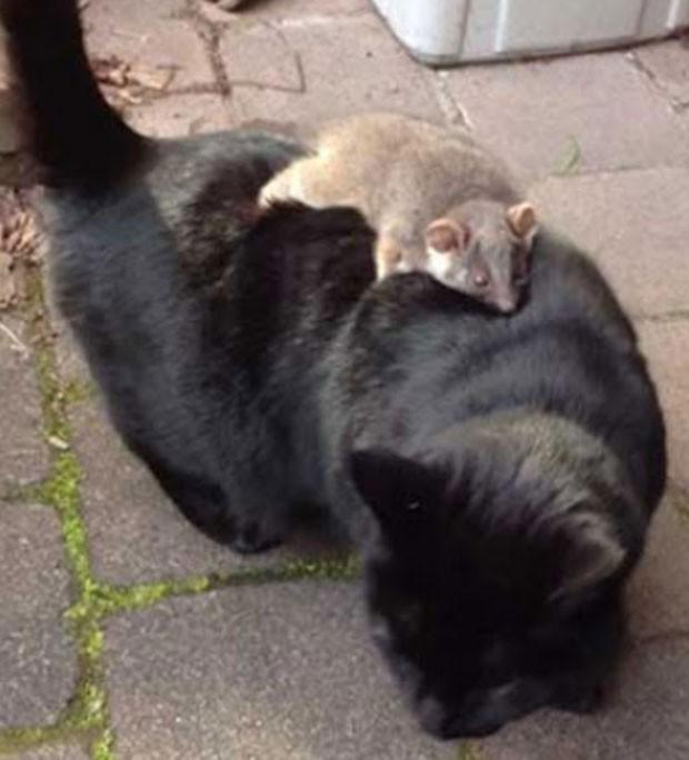 Emilia Lendoudis encontrar seu gato passeando com um gambá nas costas. (Foto: Reprodução)