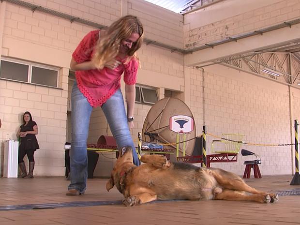 Cão woody foi adotado por alunos e funcionários no IFSP de Itapetininga (Foto: Reprodução/TV TEM)