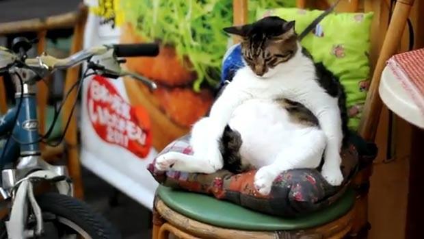 Gato foi flagrado tirando uma soneca em uma cadeira no Japão. (Foto: Reprodução)