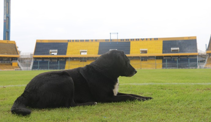 Negro cachorro Gigante de arroyito Rosario Central Libertadores Grêmio (Foto: Eduardo Moura/GloboEsporte.com)