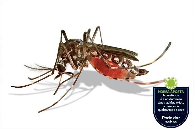 TÁ DOMINADO Além de dengue,  o mosquito Aedes aegypti causará epidemias do novo vírus, que provoca dores intensas  nas articulações  (Foto: James Gathany/Corbis)