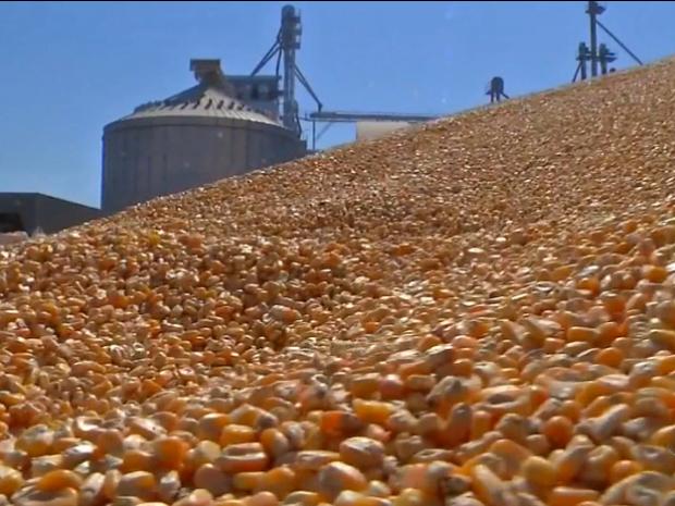 Atraso no escoamento de soja em MT fez cooperativa deixar milho a céu aberto  (Foto: Reprodução/TVCA)