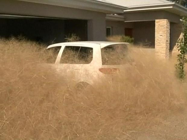 Planta cresce rápido devido ao clima extremamente seco  (Foto: BBC)