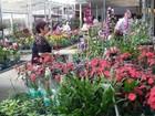 Festival de Orquídeas é opção de passeio neste domingo
