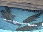 MS pede que responsável por peixes do Aquário devolva R$ 2 milhões