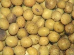 China foi o principal comprador da soja produzida em MS no primeiro semestre do ano (Foto: Reprodução/TV Morena)
