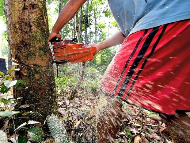 Devastação da floresta Amazônica é tema de documentário (Foto: Arquivo Pessoal/Chico Batata)