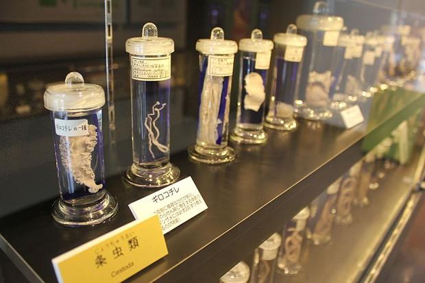 Espécimes do Museu Parasitológico de Meguro (Foto: Wikimedia Commons/Laika Ac)