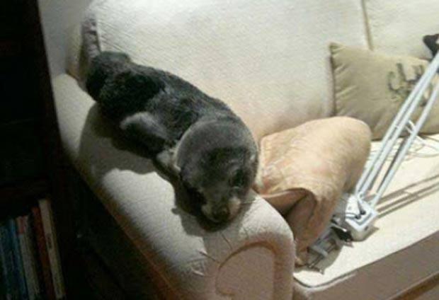 bebê foca entrou em casa na Baía de Plenty. (Foto: Reprodução)