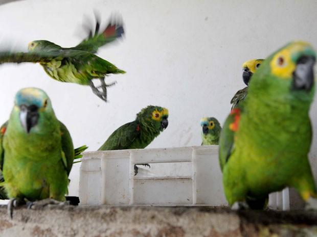 Aves vítimas de tráfico que foram resgatadas em Brasília (Foto: Dênio Simões/Agência Brasília)