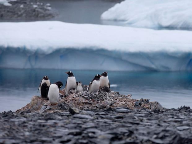 Foto de 22 de janeiro mostra pinguins em rochas perto da estação chilena Bernardo O'Higgins, na Antártica  (Foto: AP Photo/Natacha Pisarenko)